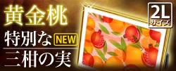 最上位 風水果実アートプレミアム 三柑の実(黄金桃)特別版イメージサイドバナー